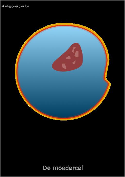Gistcel voortplanting door celdeling